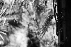 (pollution lumire) Tags: leica blackwhite m3 dukegardens ilforddelta100 blackwhitefilm summilux5014 herrm bwfp