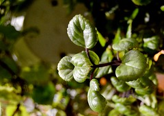 10/365 - 30/06/2016 (Rebeca de Sousa Santana) Tags: naturaleza plant verde planta leaves hojas contrapicado maceta nadir