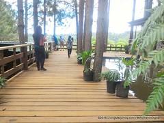 Woman-In-Digital-Dahilayan-Forest-Park-Bukidnon-017 (livingMarjorney) Tags: travels touristspot mindanao bukidnon dahilayanforestpark livingmarjorney womanindigital