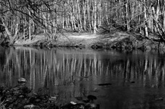 Woodland Reflections (Richie Rue) Tags: trees blackandwhite water monochrome woodland reflections river landscape outdoors mono landscapes riverbank nikond300 woodlandreflections