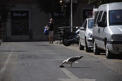 Street cleaning (Derbeth) Tags: street spain seagull carrion malaga deadpigeon d5000