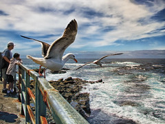 Seagulls In Flight at La Jolla Cove (` Toshio ') Tags: ocean california boy sky people cloud seagulls man bird beach flying rocks pacific sandiego seagull shoreline wave rail lajolla tourists shore railing tidepools lajollacove childrenspool toshio thewonderfulworldofbirds