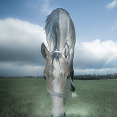 Over the rainbow (Salva Magaz [Om Qui Voyage]) Tags: sky horses arcoiris clouds neck caballos switzerland rainbow suisse suiza geneva perfil profile olympus ciel longneck cielo nubes nuages genve islan cou profil ginebra arcenciel equus chevaux vaud salva cuello akhalteke bavois olympuse3 longcou oqv salvamagaz zuiko1260mmf28 largocuello wwwmagazcom wwwsalvamagazcom