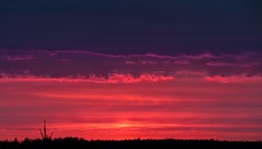 Grey Day Sunset (Ben_Senior) Tags: pink trees sunset red sky sun ontario canada silhouette clouds grey nikon purple ottawa treeline greyday d90 nikond90 skyglory bensenior