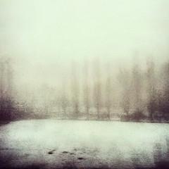 (Maurizio Dringoli) Tags: travel trees blackandwhite italy abstract art window colors fog train italia nebbia inverno treno viaggio pavia emotio flickrandroidapp:filter=none
