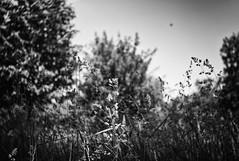 (Digital-Fragrance) Tags: camera leica people bw white black paris classic digital 35mm lens photography photo nw noir shot image shots photograph m8 et blanc elie fragrance vincennes f35 summaron leitz bescont