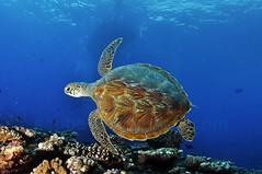 2011 08 METTRA OCEAN INDIEN 1001
