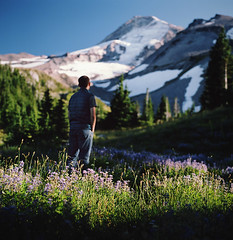 meadow light (manyfires) Tags: trees summer portrait mountains film field oregon analog forest mediumformat square landscape golden michael woods hasselblad mthood pacificnorthwest wildflowers pnw magichour lupine hasselblad500cm