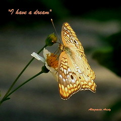 """I have a dream""/""Yo tengo un sueo"" (Altagracia Aristy) Tags: butterfly amrica papillon borboleta tropic caribbean mariposa farfalla laromana caribe ihaveadream anartiajatrophae trpico quisqueya spanishneedle amorseco repblicadominicanadominicanrepublic top20butterflyphotos altagraciaaristy fujifilmfinepixhs10 fujihs10 fujifinepixhs10 yotengounsueo"