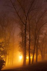 Foggy Park (Kontramax) Tags: park longexposure autumn sky color tree yellow fog night landscape lights leaf warm outdoor walk foggy leafs