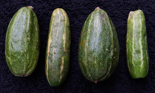 POINTED GOURD  #2  &  IVY GOURD  #2: A COMPARISON