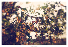 Leaves... (Strange Artifact) Tags: autumn 50mm nikon post g 14 processing filters leafs afs d90