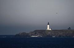 Newport Oregon (tenfeet_tall) Tags: lighthouse oregon nikon ducks pelican eugene 101 newport ncaa collegefootball autzen d90