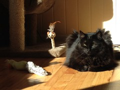 (Grace-ful Cakes) Tags: cat blackcat sunbathing cattoys cattree nachothegato
