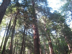 """Muir Woods • <a style=""""font-size:0.8em;"""" href=""""http://www.flickr.com/photos/109120354@N07/11042993583/"""" target=""""_blank"""">View on Flickr</a>"""
