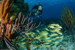 20140123_Bonaire_1172 (Pedro Paulo Cunha) Tags: underwater scuba reef bonaire wetsuit dutchantilles