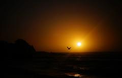 a (macarena.castro78) Tags: chile libertad mar playa gaviota pichilemu {vision}:{outdoor}=0775 {vision}:{sky}=099 {vision}:{clouds}=099 {vision}:{sunset}=0985