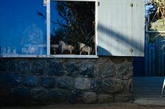 La Covancha (FIXAMENTO) Tags: chile nikon pablo neruda isla negra d5100