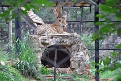 mysore zoo 6