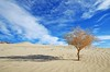 Loner (photo61guy) Tags: california blue tree nature landscape sand shadows deathvalley blueskies sanddunes autofocus longshadows deathvalleynationalpark greatphotographers treesubject g2111q