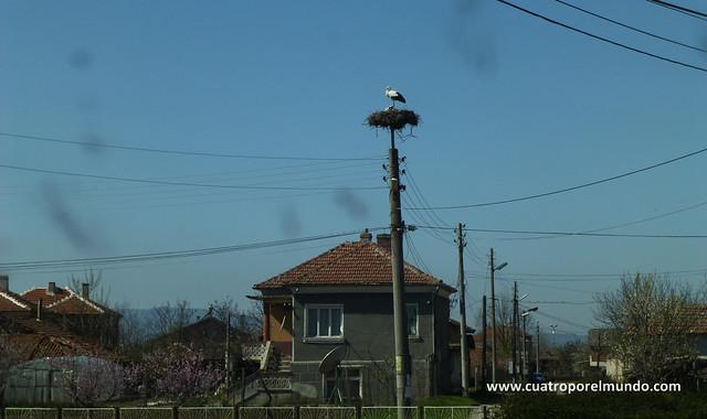 Cigüeña en un poste de la luz camino de Plovdiv