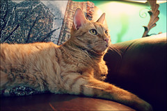 (K. Sawyer Photography) Tags: lamp animal cat couch blanket