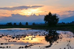 Tramonti e risaie () Tags: light sunset sky sun water field reflections landscape photography photo tramonto foto photographer rice photos country campagna cielo fields fotografia sole riflessi luce paesaggio stefano fotografo risaia trucco risaie zush d7100 stefanotrucco