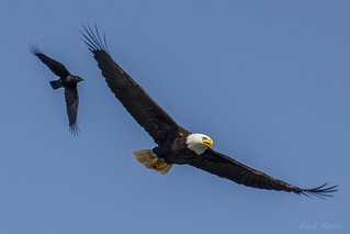 1647 Eagle and Raven