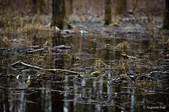 Im Auwald (augustin.nagl) Tags: zeiss bayern donau naturschutzgebiet zf2 aposonnart2135zf2 aposonnart2135 sonnar1352zf staatshaufen