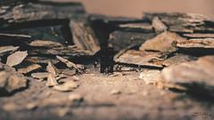 Monolith (3rd-Rate Photography) Tags: 2001 brick rock canon movie toy 50mm monkey book lego florida scifi jacksonville 365 monolith stanleykubrick arthurcclarke 2001aspaceodyssey hoscale toyphotography 5dmarkiii earlware 3rdratephotography