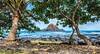 Koki Beach Park, Maui (philhaber) Tags: park trees hawaii sand maui pacificocean hana kokibeach