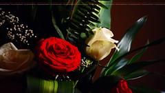 Happy valentines day (dr.7sn Photography) Tags: roses flower rose cards happy nikon day valentine gifts valentines bouquet وردة حسن تصوير الحب روز نيكون الشهري d7100 باقة احترافي فلنتاين بوكيه dr7sn