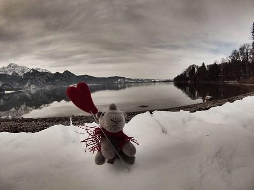 Ringo on Valentines Day #r2s #rhino #adventuremascot #snow #winter #germany
