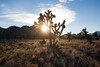 Yucca Valley, CA (ChrisGoldNY) Tags: california sunset sky clouds forsale desert joshuatree lensflare albumcover bookcover bookcovers albumcovers licensing yuccavalley chrisgoldny chrisgoldberg chrisgold chrisgoldphoto chrisgoldphotos