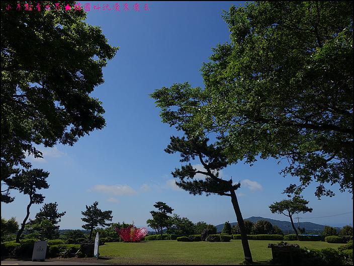 濟州山茶花庭院 (3).JPG