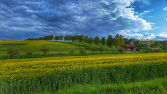 Out in the fields (RainerSchuetz) Tags: trees clouds barn landscape spring rape agriculture avenue darksky rapeseed rowoftrees