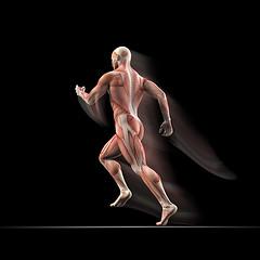 HIIT (procuramed) Tags: muscles illustration germany person 3d arm natur nackt mann form jogging fitness biology rennen medizin kraft laufen vital wissenschaft haut anatomie gesundheit sprinter joggen masseur musculature fitnessstudio gesund arzt athlet sportler menschlich abbildung analyse muskel sehnen isoliert kardio anatomisch sportmedizin lufer mnnlich muskuls strke sportwissenschaft krper muskelfleisch vitalitt brustmuskel krperbau krpergewicht