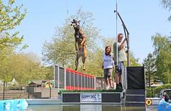 Animal Event Hilvarenbeek - 2016 (Omroep Brabant) Tags: holland animals katten nederland thenetherlands kip dieren brabant flyball beeksebergen koe koeien honden hilvarenbeek varkens omroepbrabant hondenzwemmen animalevent doggydating dierenwelzijn wwwomroepbrabantnl dierenfestival