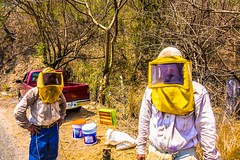Beekeepers collecting honey and alimentos to make sugar.