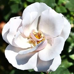 Maig_1024 (Joanbrebo) Tags: barcelona park flowers parque flores fleur blossom blumen fiori parc flors autofocus parccervantes efs18135mmf3556is doublefantasy canoneos70d