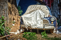 Panjim, India. (Bolin27) Tags: street old travel india tree abandoned broken car cat grit asia decay goa kitty down hidden dirt cover covered grime hiding derelict panjim panaji