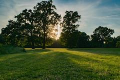 Branch Brook Park (Ben De La Rosa) Tags: silhouette newjersey branch shapes brook newark goldenhour goldenlight