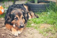 Luna (jr_moon) Tags: dog pet cute animal dof bokeh hund haustier tiefenschrfe
