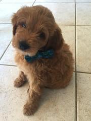 Sophia and Chewy's handsome boy Oscar!