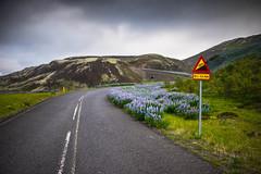 DSC07681 (Gumundur Rbert) Tags: sky white mountain black 35mm cycling climb iceland cloudy f14 sony climbing rolf prima reykjavk sland ares a7ii pansonic samyang reihjl rokinon