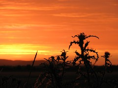 burning horizon (s_lverspring) Tags: sunset sky orange silhouette monster dark frozen solitude quiet peace dusk symmetry silence moment bliss shape intermezzo