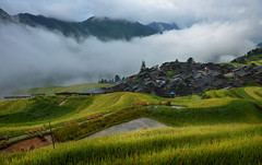 Traditional wooden village in the ricefields, Guizhou, China (magbrinik) Tags: china fog landscape countryside chinese beautifullight yunnan guizhou cloudysky foggyday rurallife traditionalvillage travelphotography ruralscene oldchina woodvillage rurallandscape chineselandscape astoundingimage traditionalchinesevillage ruralfeeling