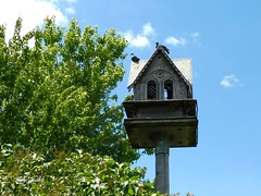 The Spirit House in a Toronto park (Trinimusic2008 -blessings) Tags: summer sky house toronto ontario canada tree nature birds june pigeons sunny to yesterday 2016 humberbaypark trinimusic2008 judymeikle photoshootwithcassius spirithousebirdsbutterfly