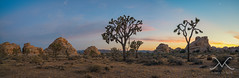 Joshua Tree Sunset Panorama (Mike Ver Sprill - Milky Way Mike) Tags: joshua tree panorama pano mike michael ver sprill versprill mv cali california nikon d800 1424 landscape sky earth amazing trees mountains gorgeous travel explore best photography every greatest trails camping camp peter lik style large format printing 29 palms hidden valley exposure outdoor sunset sunrise beautiful bushes brush summer june 2016 plant field flintstones fraggle rock