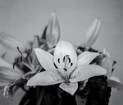 Still Life 7 (micke_wall) Tags: life flowers white black mamiya nature analog still bokeh mamiyarb67 natuer